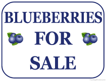 Blueberries For Sale Sign